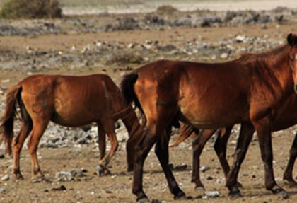Delft_Wild_Horses